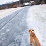 A Dog On Ice