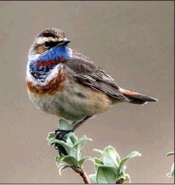 Meet The Birds Of Alaska