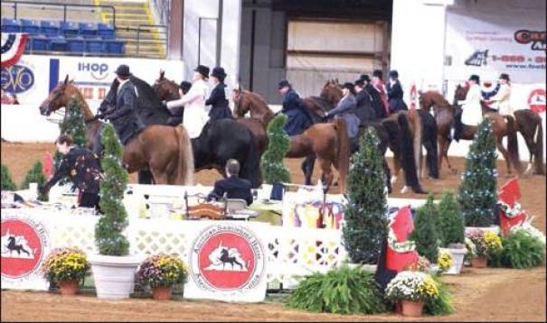 Saddlebreds Come To Town