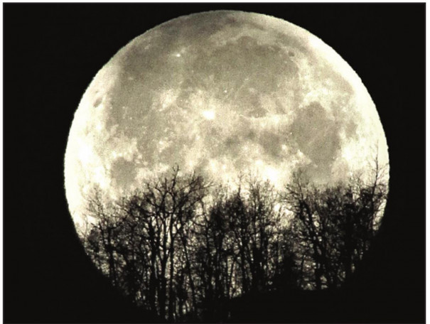 Snow Moon Show