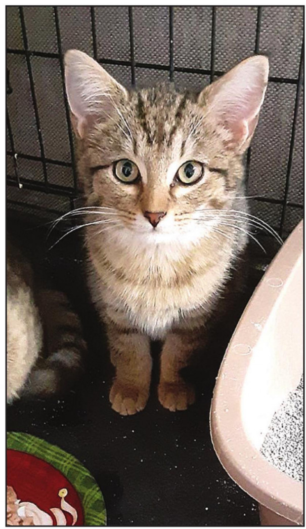 THIS CAT is one of many that spent time at Mary Huffman's place of business, Flowers & Things, while waiting to be adopted out by Furever Friends.