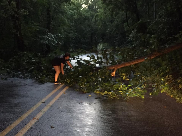 Margaret Lawrence helping to remove tree, Kerrs Creek area, photo by Susan Lawrence